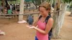 Svart kakaduafågel, här på Billabong Wildlife Sanctuary